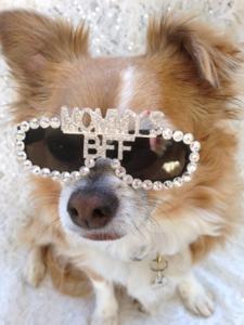 Gafas de sol perro