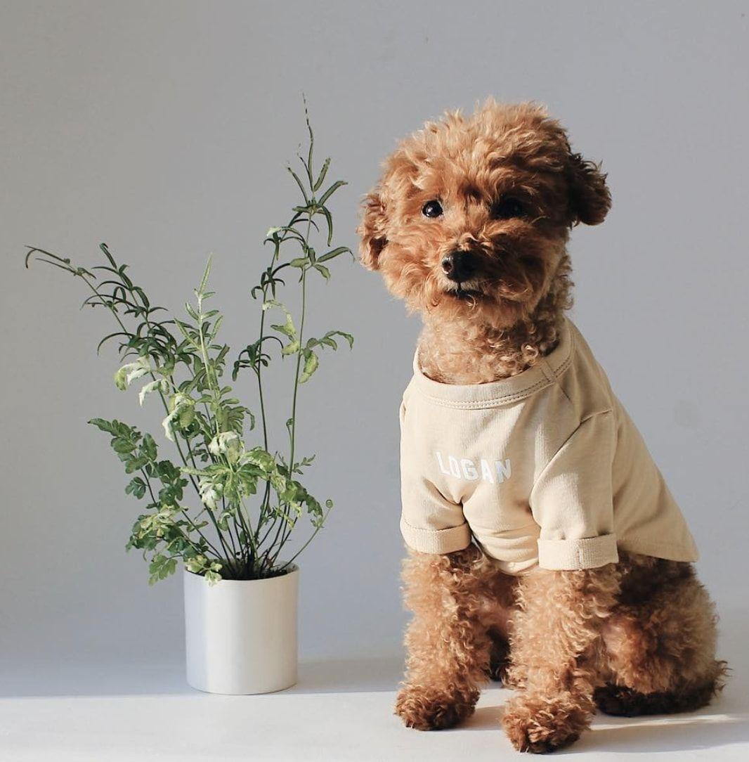 mascotas más fashion